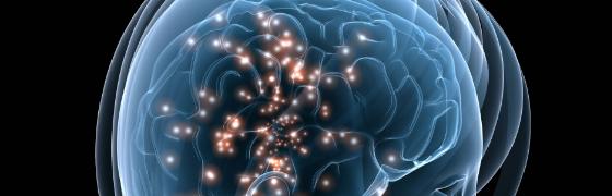 """""""Das Gehirn"""" – Teil 2"""